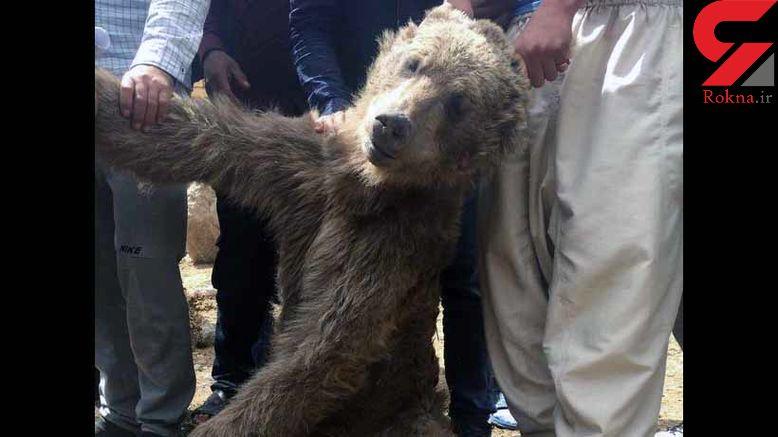 دستگیری عامل کشتار خرس قهوه ای در مرودشت + عکس یادگاری تلخ با جسد خرس