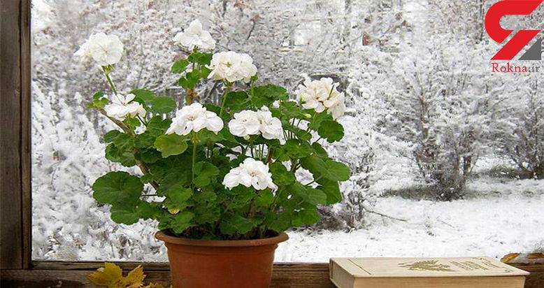 راهکارهای نگهداری از گل های آپارتمانی در هوای سرد