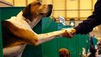 فروش سگ هاى تزئینی همراه با پاسپورت و شناسنامه در نمایشگاه بین المللی مشهد + عکس