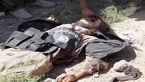 انتحاری ترین مرد داعشی کشته شد +عکس