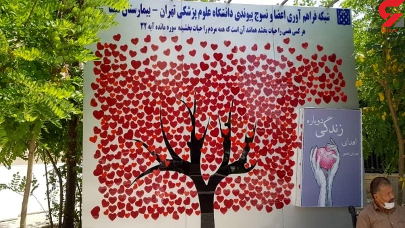 1260 اهدای عضو در روزهای کرونایی تهران