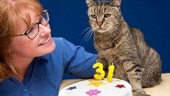 این گربه 31 ساله پیرترین گربه دنیاست+عکس