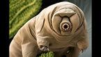 خرس های آب ؛ آخرین بازماندگان زمین +عکس های جالب