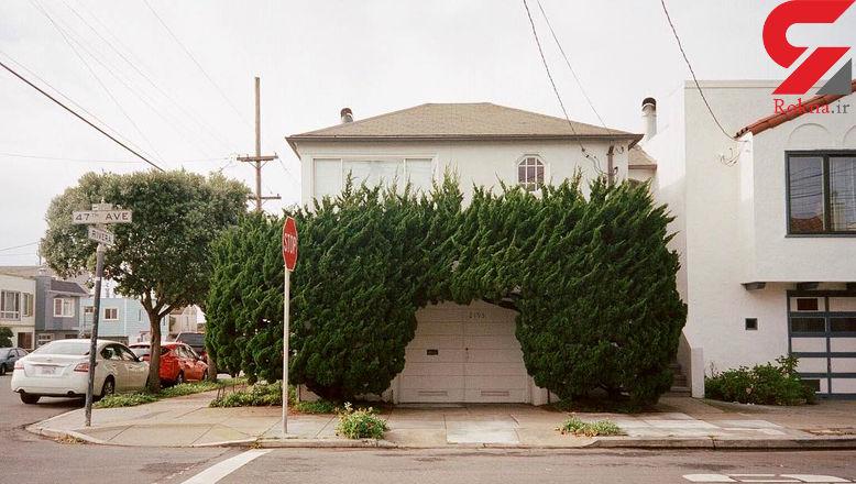 درختانی عجیب و قل قلی در سان فرانسیسکو + تصاویر
