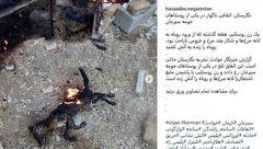 آتش کشیدن زنده زنده یک روباه در سیرجان جنجالی شد +عکس