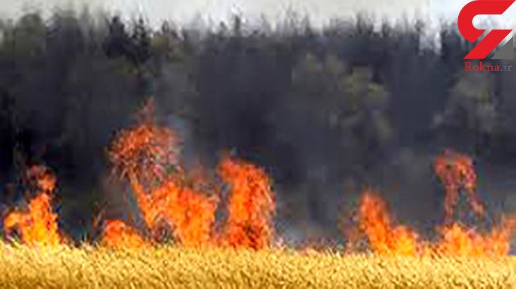 آتش سوزی در ۵۰ هکتار از مزارع گندم فیروزآباد فارس