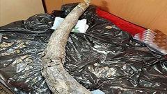 کشف فسیل 20 میلیون ساله فیل در پروژه راه آهن میانه – اردبیل +عکس