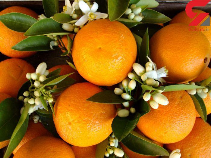 نتیجه تصویری برای نارنج