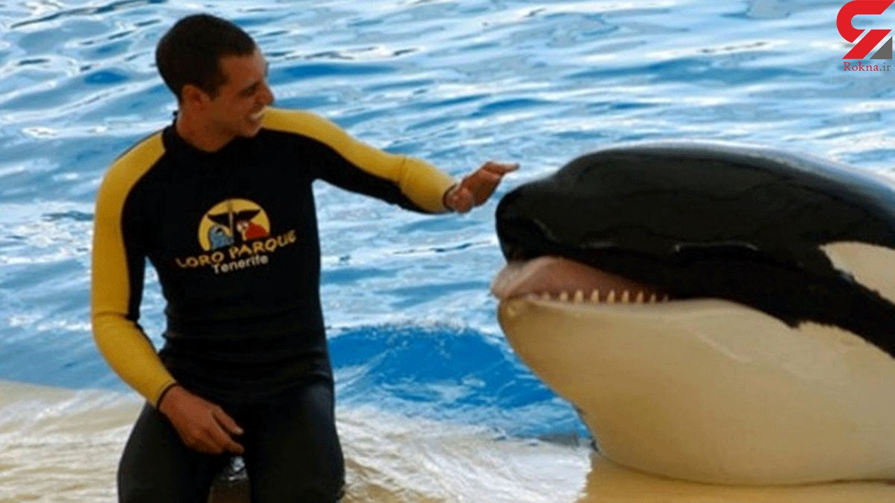 Trainer's horrifying death as SeaWorld killer whale 'bit his body and tore his organs'