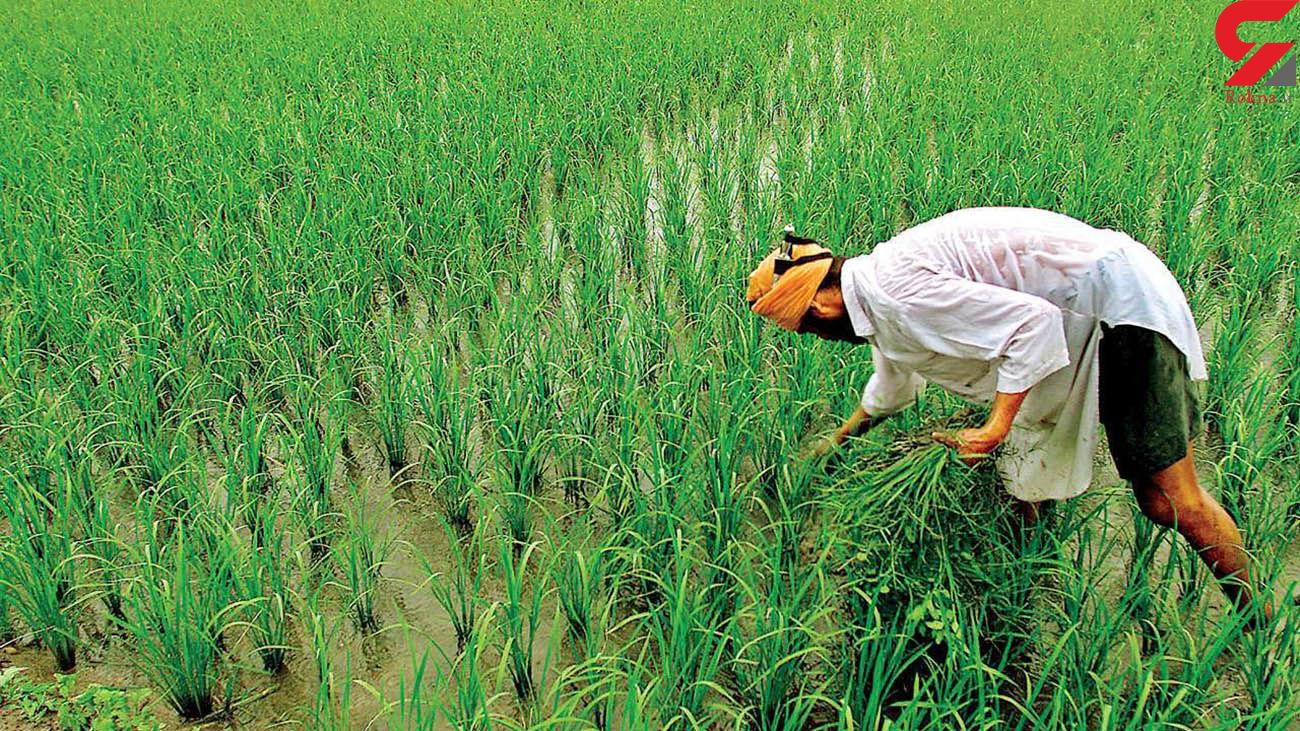 خبر خوب مجلس برای کشاورزان