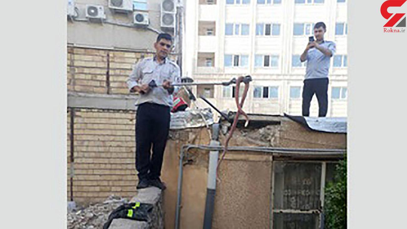 این مار سمی سرخ ۲ متری در سقف خانه یک زنجانی لانه کرده بود +عکس