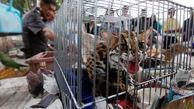 انهدام باندهای قاچاق حیوانات وحشی در جهان