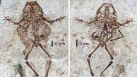 کشف فسیل قورباغه 125 میلیون ساله با سمندری در شکم+ عکس