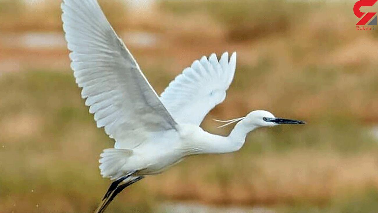 Migratory birds embark on winter trip to northeastern Iran