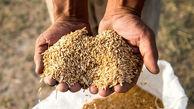 امسال 5 میلیون تن گندم کم داریم / گران شدن نان ربطی به قیمت گندم ندارد !