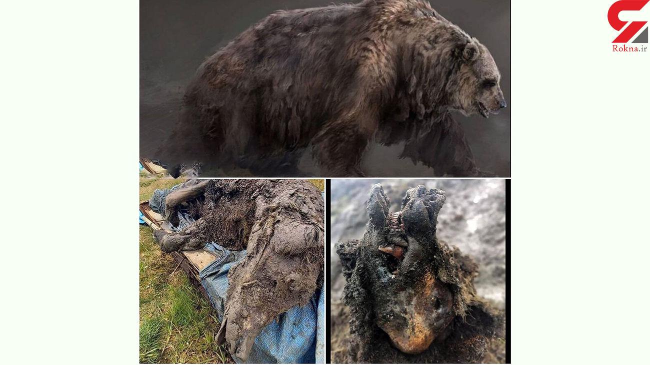 خرس 39 هزار سال پیش وحشتناکتر بودند + عکس ها