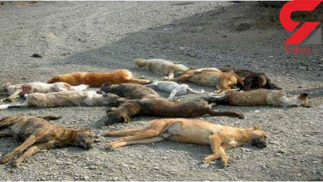 فاجعه در همدان / دهیار بی وجدان دست به کشتار زد+ عکس