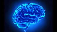 کشف سلولهایی که مغز را نجات میدهند