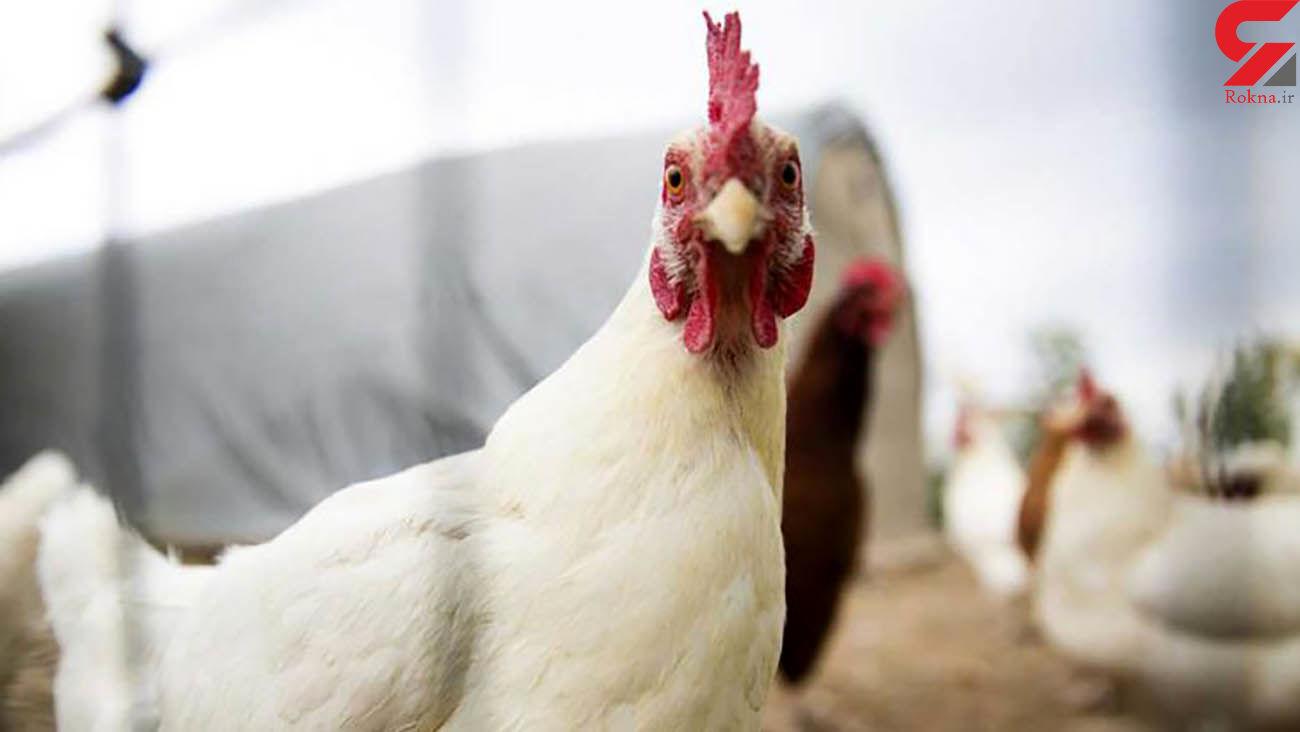 افزایش چشمگیر قیمت مرغ در بازار / قیمت گوشت قرمز، برنج و شکر چقدر افزایش یافت؟