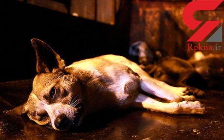 سگکشی در همدان ممنوع شد! + جزییات