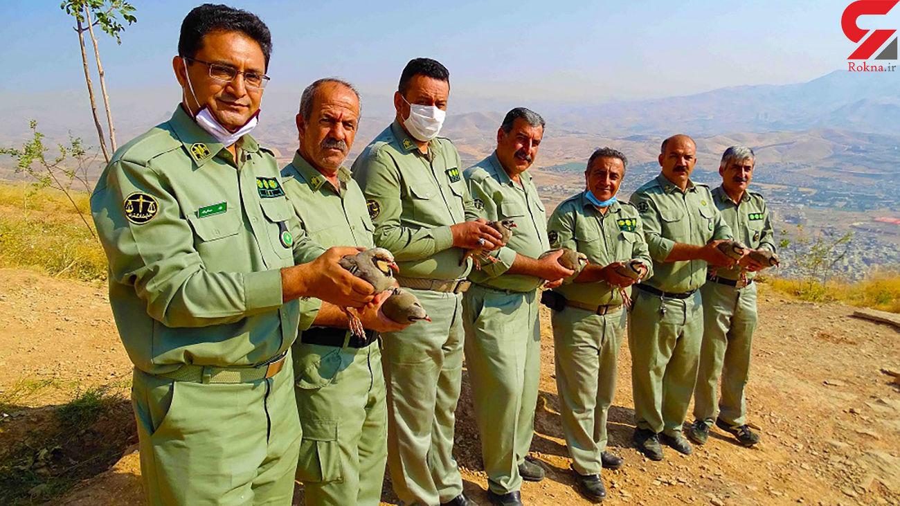 نجات 36 قطعه کبک از دست دو شکارچی غیر مجاز