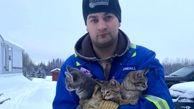 نجات سه بچه گربه از برف های یخ زده + فیلم