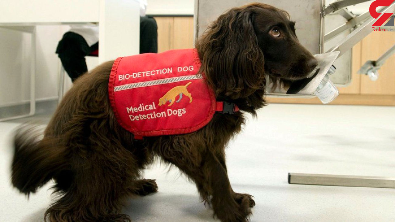 استفاده از سگ برای شناسایی  کرونایی ها در فرودگاههای امارات