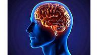 فریز کردن مغز برای حیات دوباره در آینده