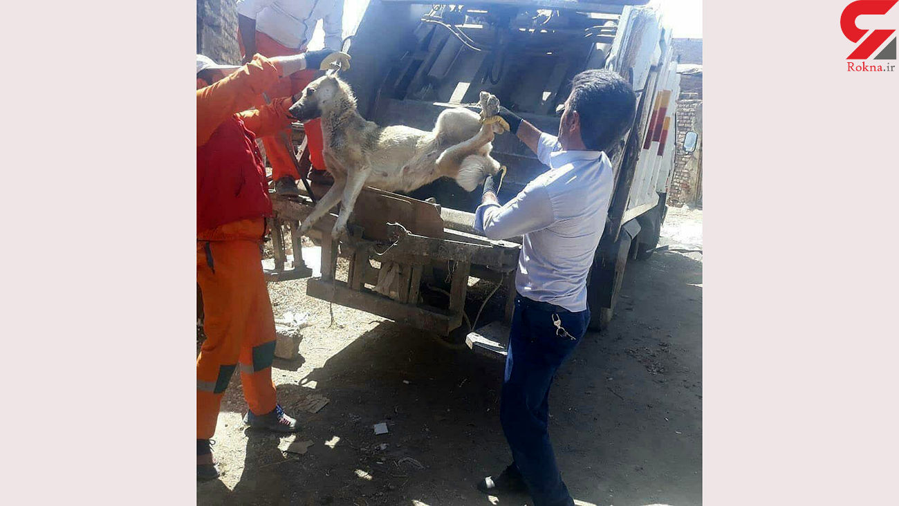 سگ کشی با دستگاه پرس زباله در سلماس چه پشت پرده ای داشت؟! / روابط عمومی شهرداری  توضیح داد