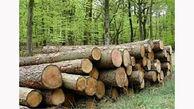 کشف 2 تن چوب قاچاق در تویسرکان