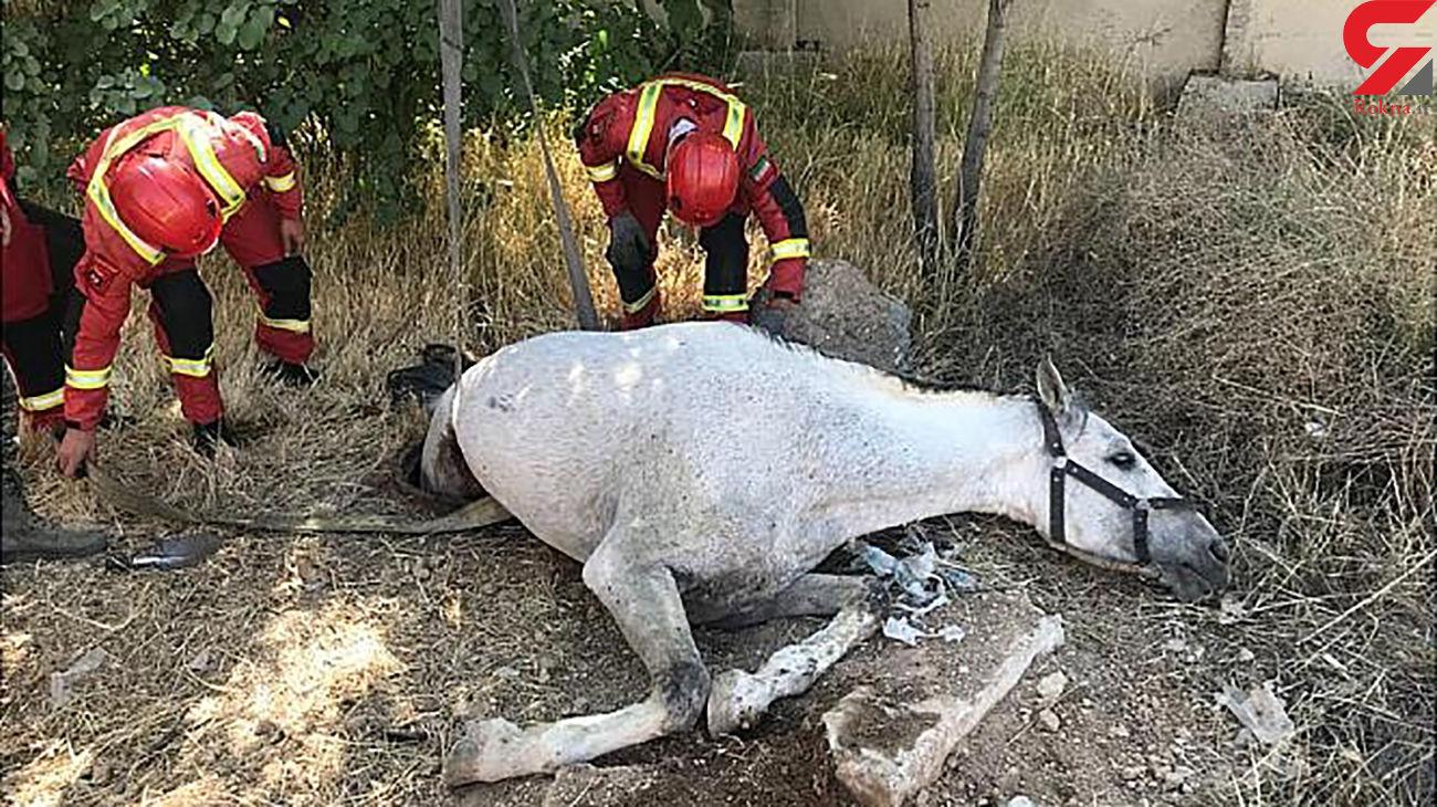 اسب سفید آتش نشانان تهرانی را به دردسر انداخت + عکس