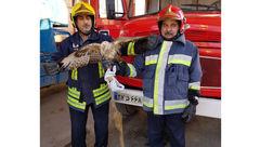 وحشت از عقاب در خانه مرد اهوازی + عکس