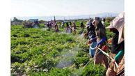 صادرات ۶ محصول کشاورزی به عراق ممنوع شد