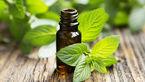 این سبزی معطر عملکرد مغز را افزایش می دهد