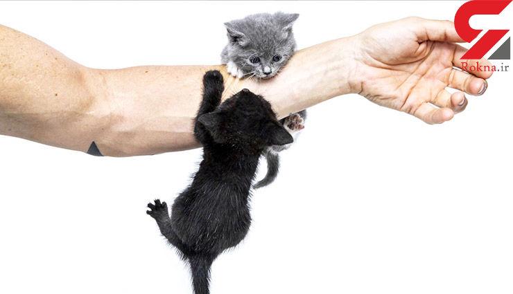 بیماری هایی که از گربه ها به انسان منتقل می شوند