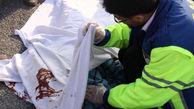 """برخورد خونین مینیبوس با کامیون در محور """"قزوین – بوئین زهرا"""""""