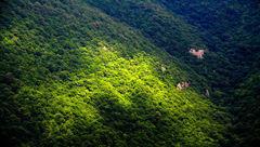 70 هزار هکتار جنگلکاری در گلستان