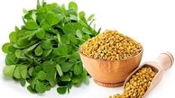 دیابتی ها این سبزی را جایگزین انسولین کنند+دستور تهیه شربت گیاهی