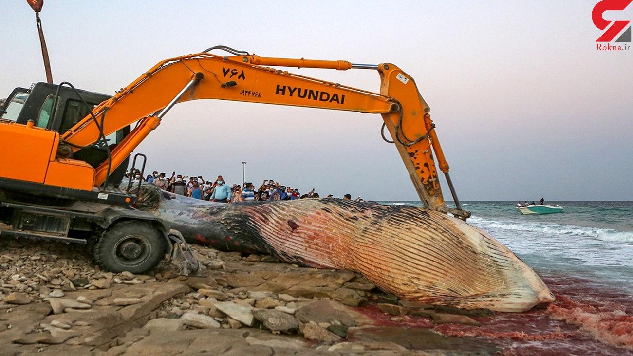 جزئیاتی از تلف شدن نهنگ در کیش