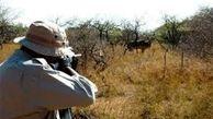 دستگیری شکارچی متخلف در چوار ایلام