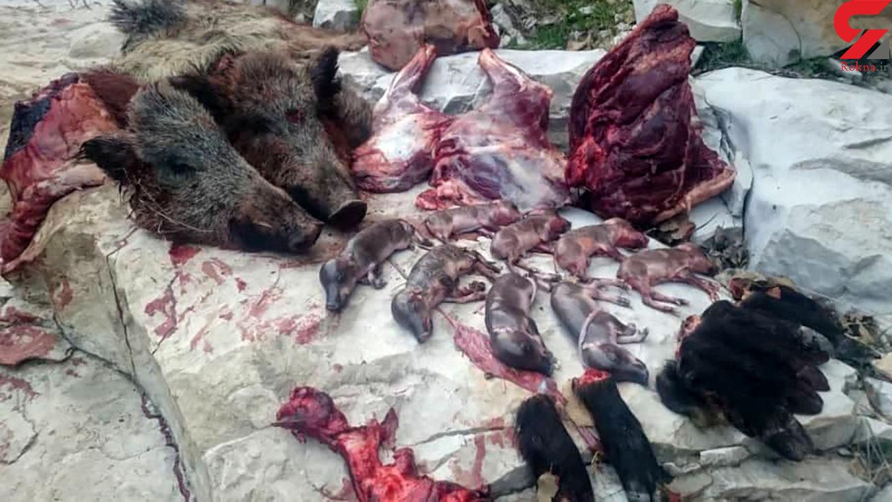 بازداشت منفورترین شکارچی ایران / او به گرازهای آبستن رحم نکرد + عکس