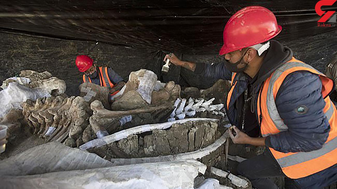کشف گورستان ماموت های ماقبل تاریخی در مکزیک + عکس