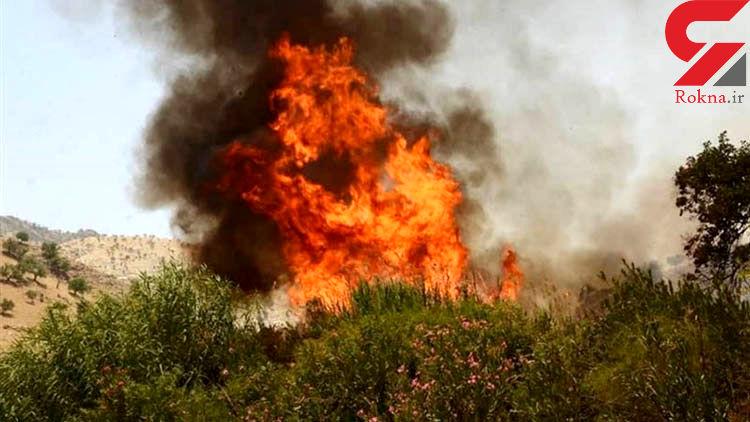 ۲۰۰ منطقه جنگلی فارس دچار حریق شد