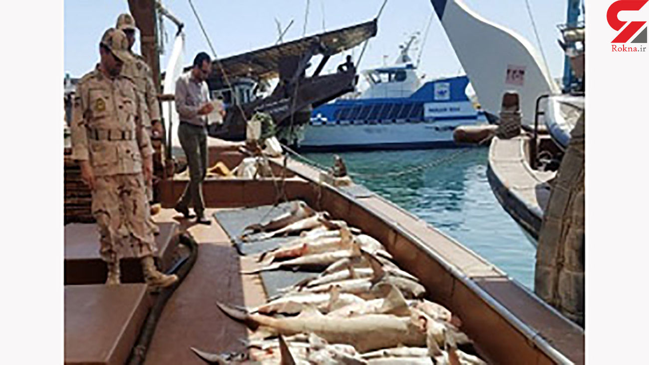کشف بیش از 8 تن ماهی قاچاق در جزیره بوموسی