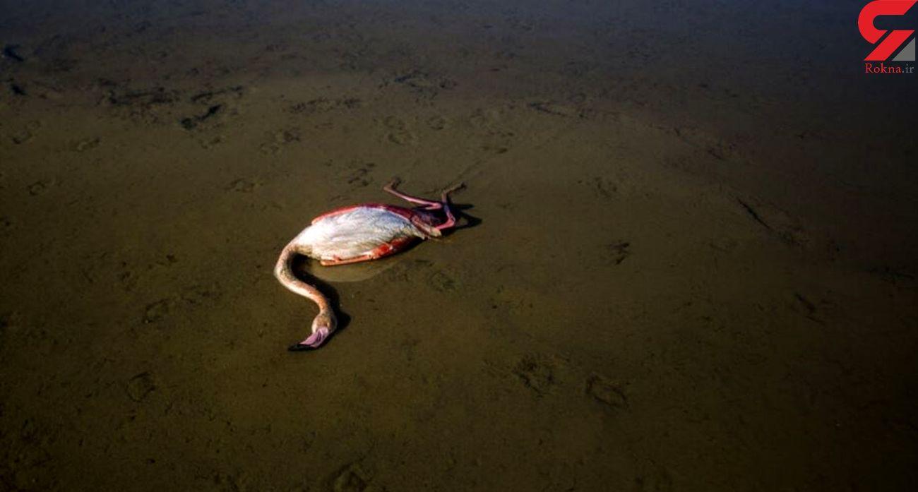 بزرگترین خلیج دریای خزر در حال مرگ
