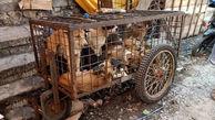 توزیع گوشت سگ در بازارهای اندونزی !+عکس دلخراش