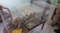 دستگیری 4 شکارچی کبک وحشی درتربت حیدریه