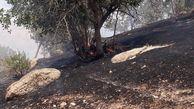 آتش سوزی بیش از ۱۰۰هکتار از جنگلهای منطقه حفاظت شده دنا  + عکس