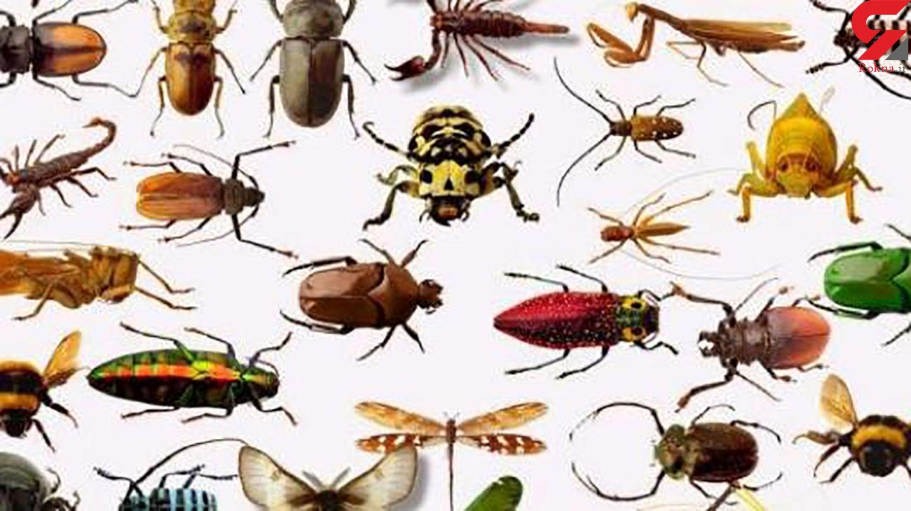 چطور با حشرات خانگی مبارزه کنیم؟ + عکس