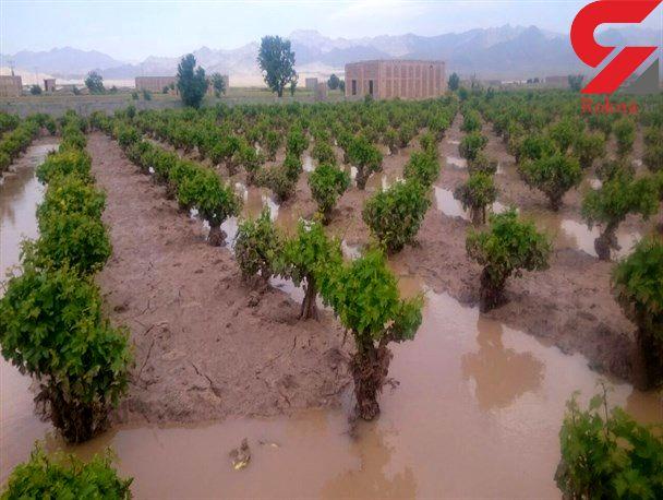 تخریب ۲ هزار و ۵۰۰ کیلومتر کانال کشاورزی بر اثر سیلاب